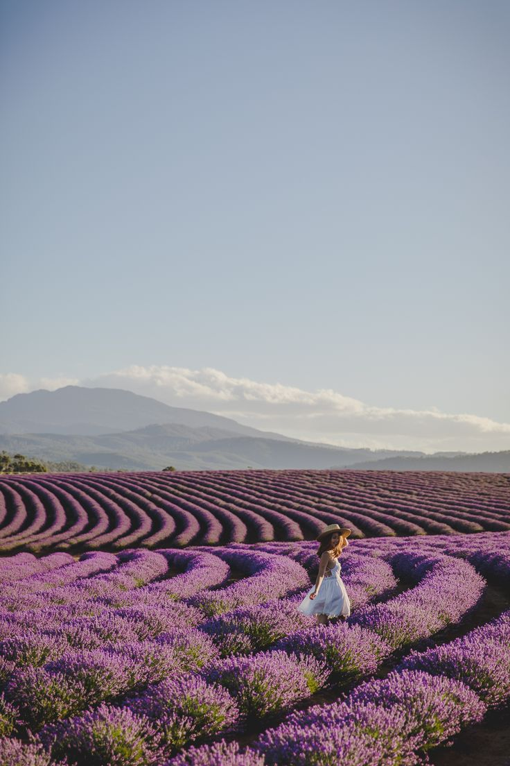 Nothing can beat wandering through endless fields of lavender, its aroma filling the air..