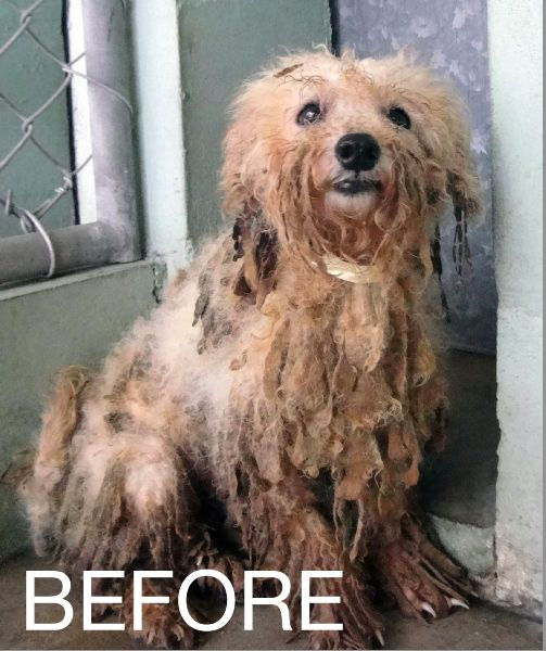 BEFORE Puppy Mill Dogs: Before-and-After Photos | Dogster