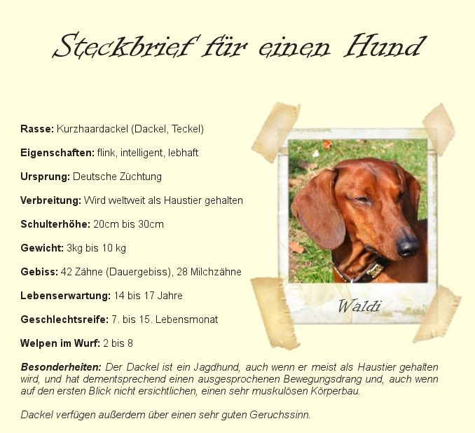 Steckbrief Am Beispiel Eines Hundes Steckbrief Brief Lebenserwartung