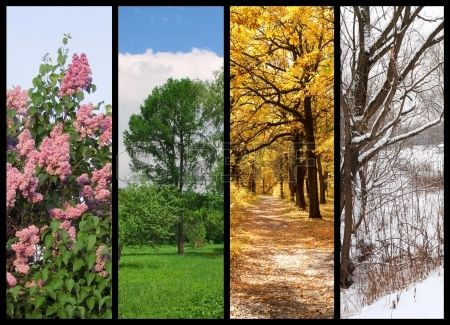 four seasons spring, summer, autumn, winter trees collage with border