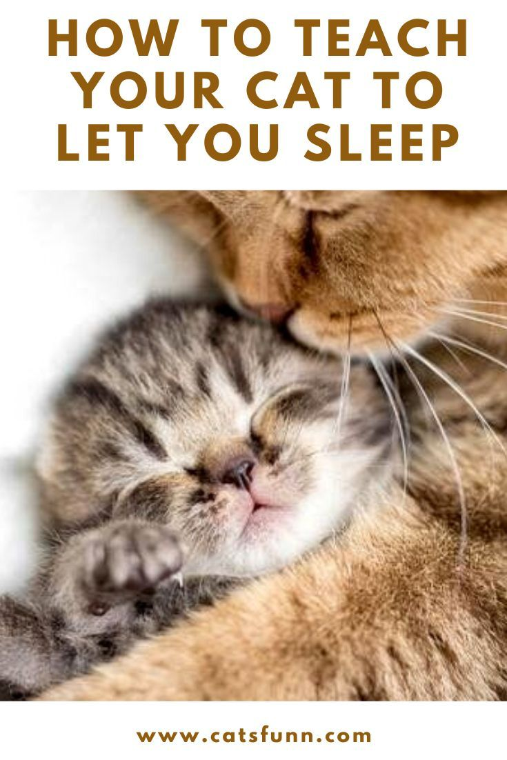 5 Tips To Get Your Cat To Let You Sleep With Images Cats Cat Quotes Funny Training A Kitten