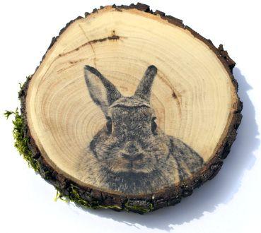 BALAB_królik