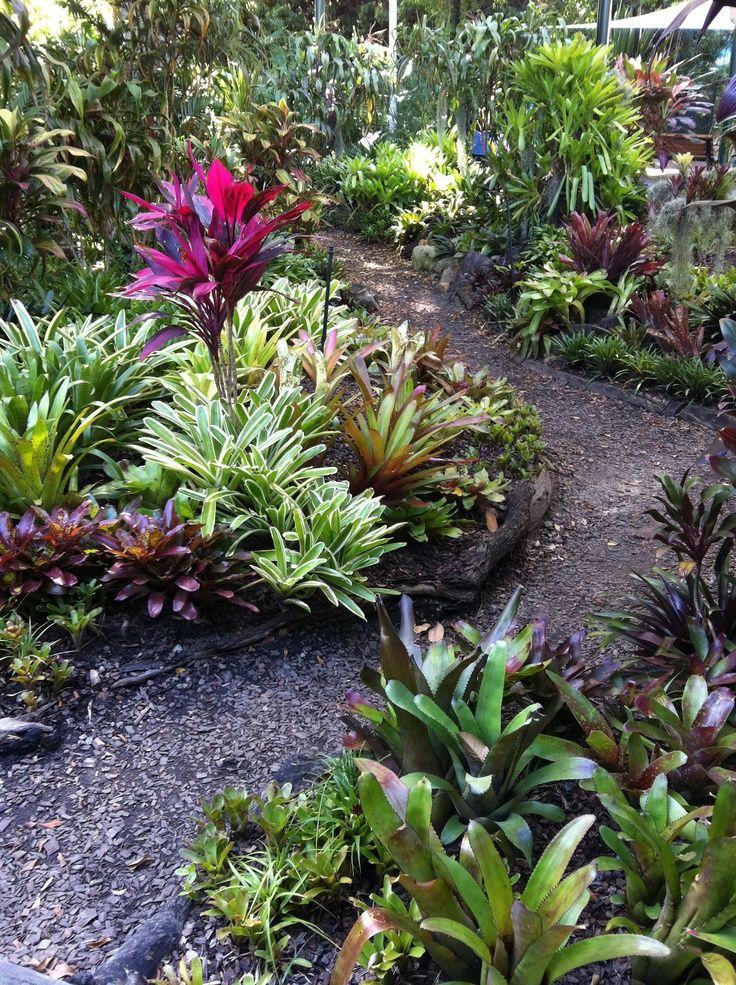 bromeliad garden   Bromeliad garden, Roma Street Parkland, Brisbane, ...   Bromeliad