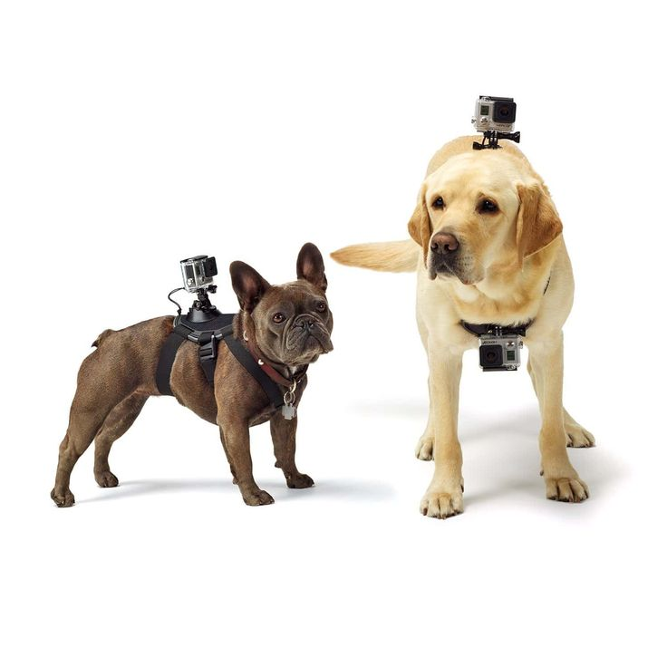 The GoPro Dog Harness With Camera Mount allows to to get a dogs-eye view of the world. Adjustable to fit dogs of all sizes. Two camera mounts chest & back.