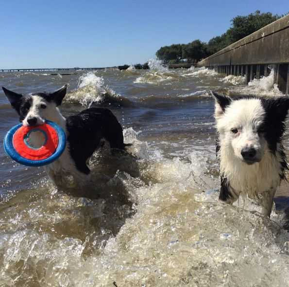 Splash time at Mandeville Lakefront - Mnadeville, LA - Angus Off-Leash #dogs #puppies #cutedogs #dogparks #mandeville #louisiana #angusoffleash