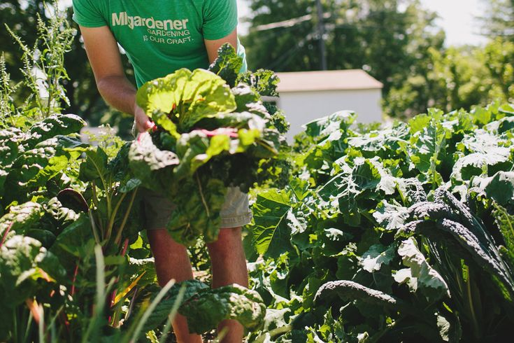 Learning to garden made easy - Free information - Free Ebooks - .99 heirloom & organic vegetable seeds - Organic gardening and much more. Come grow with us!