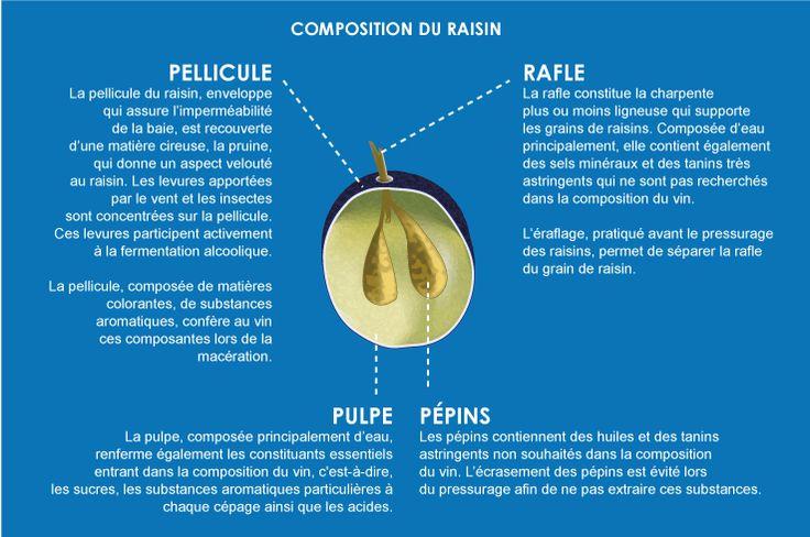 Composition d'un raisin