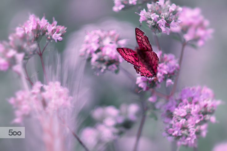 Lightness for wings by Michela_Chiarizio on 500px