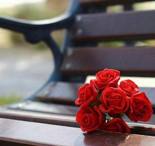 Image Result For عسى كل حلم طال انتظاره Flowers Rose Plants