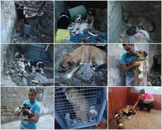Bij een oud verlaten huis zagen de vrijwilligers van ABYDA deze moeder hond met haar 4 puppy's. Ze brachten de honden eten maar er is in het asiel geen ruimte om ze op te nemen. Er is helaas geen geld om de honden onder te brengen in het pension wat 120 euro per maand voor de hele familie kost.  F.o.A kon 190 euro overmaken zodat de honden uit deze vervelende situatie gehaald konden worden en nu veilig in een pension zitten