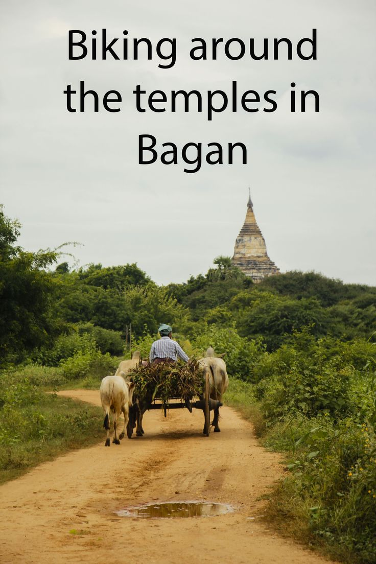 The only way to visit Bagan! http://aworldofbackpacking.com/uk/bagan-elcykler-templer-og-uheld/