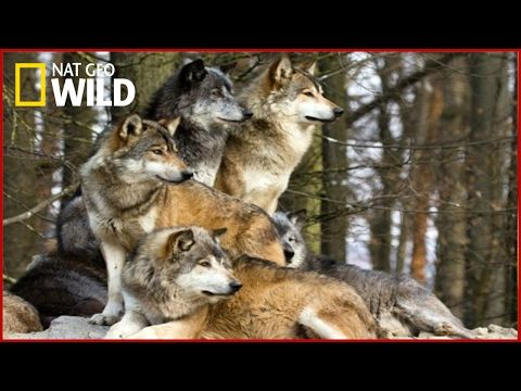 National Geographic Wild - Dog and Human - BBC Documentary History - YouTube