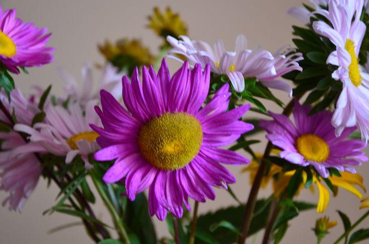kwiaty z ogródka