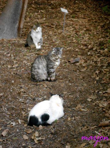 cats-litltle ladies