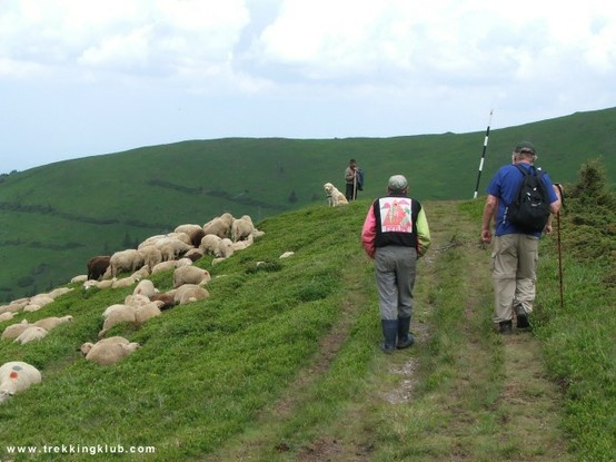 Ahead the shepherd with no.1 dog, others unseen in the bushes bark as we pass, a long way up to go yet. #Ciucas_mountains.