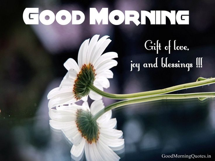 Image result for best of good morning wishes
