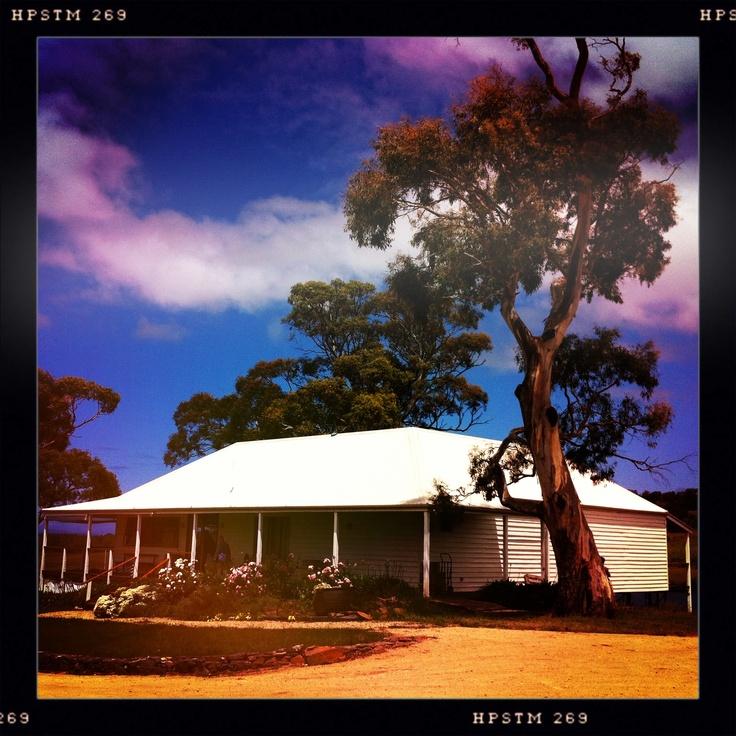Milton Vineyard. East Coast of Tasmania