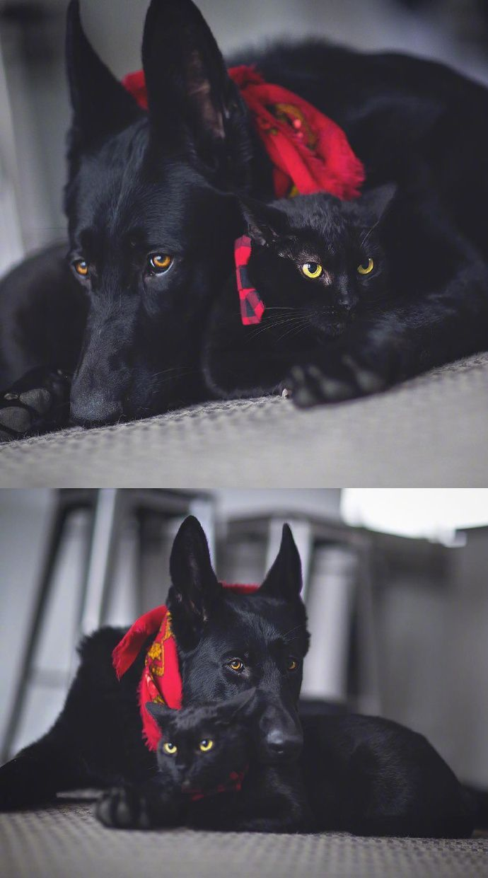 Daily Life Of Black Dog Kingsley And Black Cat Otis From Canadian