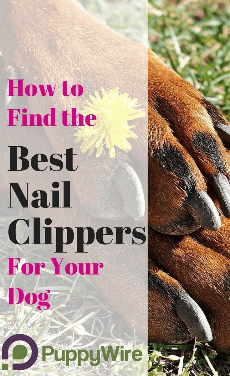 Best Dog Nail Clippers For Small And Large Dogs 2019 Must Have