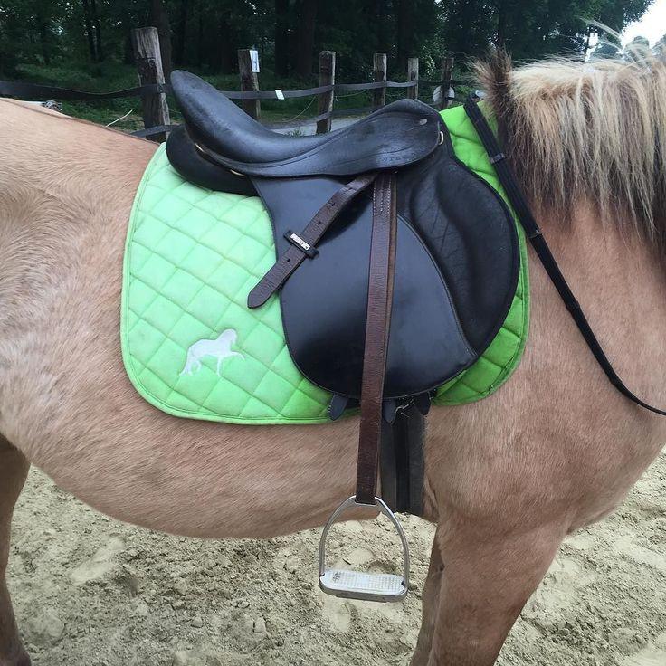 Na wer hat auch so eine schöne Ombré-Schabracke?  Das hintere Stück hat etwas zu viel Sonne beim trocknen abbekommen.  #Merlin #Reitbeteiligung #Norweger #Pferd #Pferde #pferdeaufinstagram #horse #horses #horsesoninstagram #grün #Schabracke #ombré #sonnengebleicht #ups #ombréschabracke #zuvielsonne #nichtgewollt by merlin_lets_ride