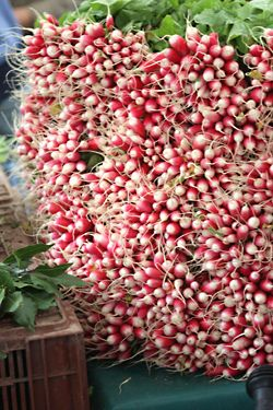 Radishes at the Sunday Paris Market - looking forward to trying some sliced with butter on toast