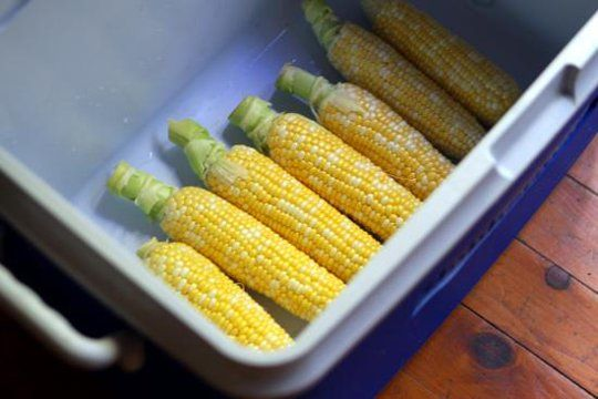 "Have You Ever Heard of Cooler Corn? - July 4th was yesterday, but picnics will continue all through the weekend. And then there's the beach getaway, and the family reunion, and what all that adds up to, basically, are lots more opportunities to eat corn on the cob. We just learned the most interesting trick for cooking corn on the cob for a crowd — have you ever heard of ""cooler corn""?"