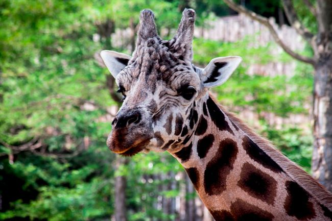 If I Ran the Zoo KIDS' DAY OFF PROGRAM February 15 9:00-12:00pm Like Dr. Seuss' story, we will start out learning about real zoo animals, then dive into our imaginations to make up our own creatures. If science and art both sound like fun, this is the program for you!