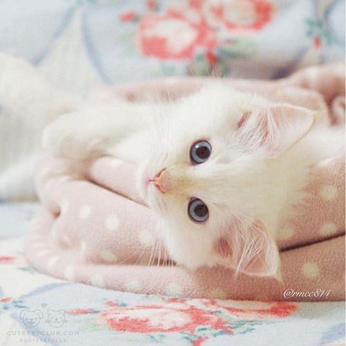 Nada mejor que un hermoso y lindo gatito para decorar cualquier espacio del hogar