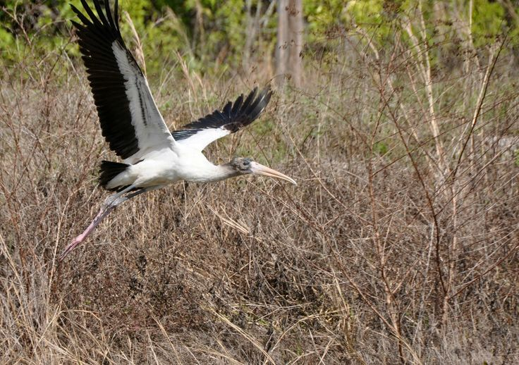 17 best images about book board mystic glades harlequin for Fishing in the everglades