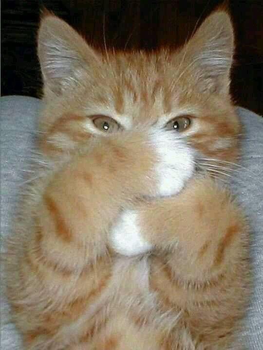 Cute Orange Tabby Cat Kitten
