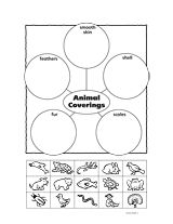 Animal Coverings Graphic Organizer (K) - TeacherVision.com