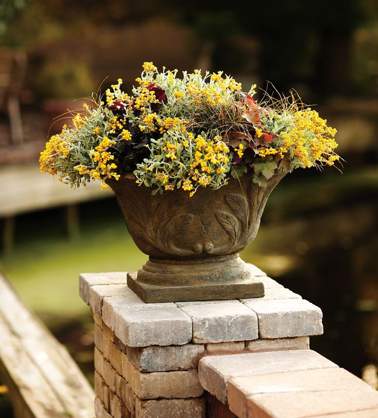 1000+ Images About Container Garden Recipes On Pinterest