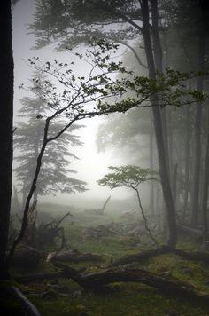 Image result for bruno blais photographer