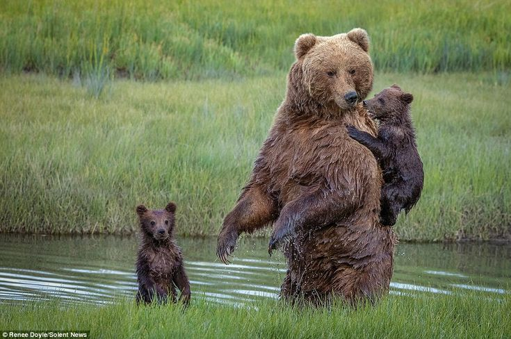 According to witness Renee Doyle from Australia, one of the cubs was incredibly reluctant in entering the narrow creek
