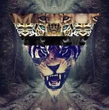 ojitos de tigres