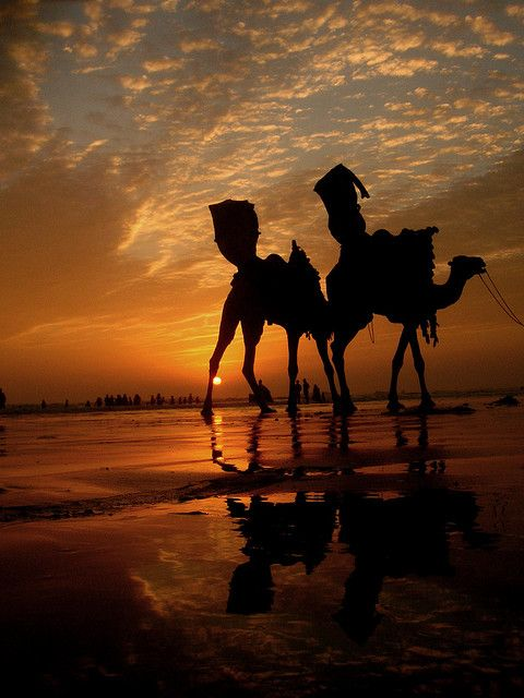 SUNSET  Camels _____________________________ Reposted by Dr. Veronica Lee, DNP…