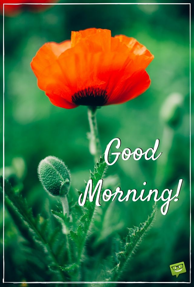 869 best wishes images on pinterest good morning bonjour and buen dia amazing good morning images and quotes to inspire a perfect day m4hsunfo