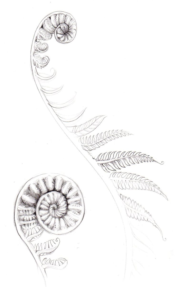 fern tattoos - Google Search