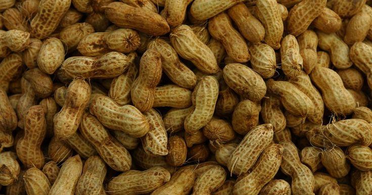 Cómo cultivar cacahuetes en el jardín de tu casa. Los cacahuetes son plantas tropicales que gozan de pleno sol y clima cálido, por lo que están bien en el jardín de tu casa en los meses de verano. Al principio los jardineros tienen cuatro tipos de cacahuetes para elegir: Virginia, corredor, español y valencia. Cada tipo de cacahuete tiene un sabor y tamaño distinto y característico, pero todos ...