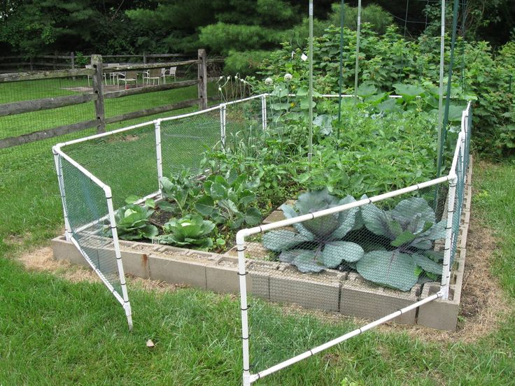 Best 25 Chicken Wire Fence Ideas On Pinterest Garden