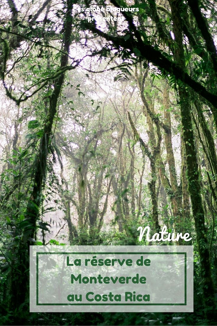 Partez à la recherche du mythique quetzal dans la réserve de Monteverde au Costa Rica.