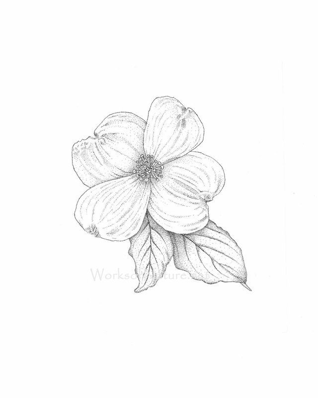 pen and ink dogwood flower - Google Search