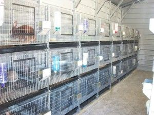 The Rabbit Barn stacked cages