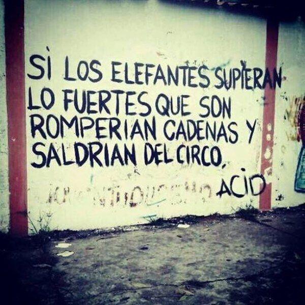 Si los elefantes supieran lo fuertes que son romperían cadenas y saldrían del circo  #poesia #paredes