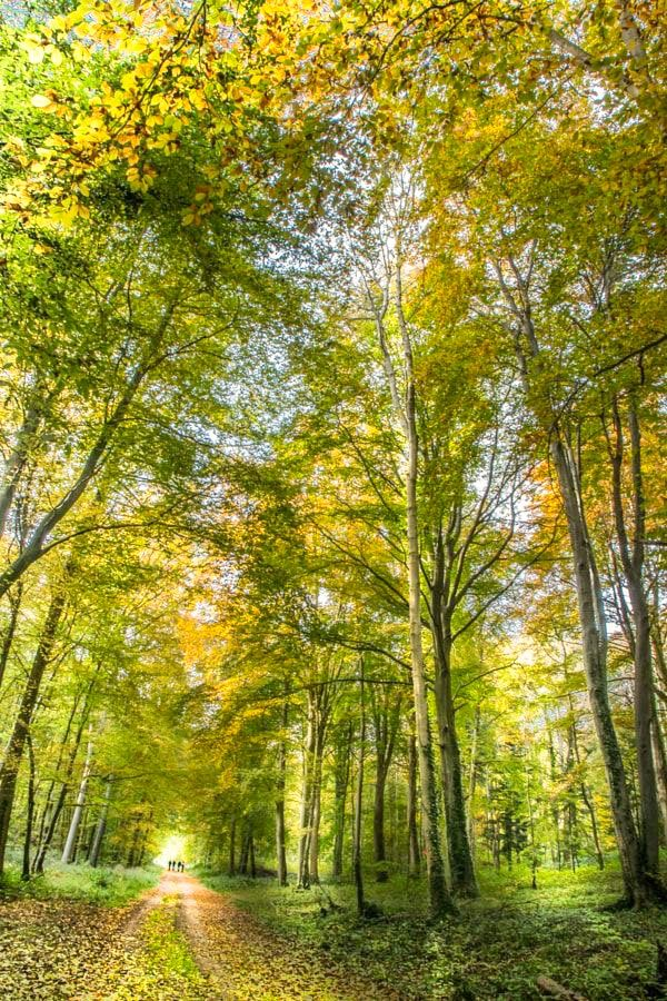 Ballade automnale [Song of autumn] (France) by Dumortier Frédéric / 500px