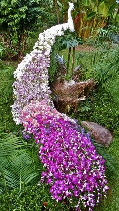 Stunning Peacock made of hundreds of Thai Orchid Stems & Roses with colors changing from white to pink to purple. The tail measured 5.5 meters (18′) long. Created by Chai Somyana of C.S. Floral Design
