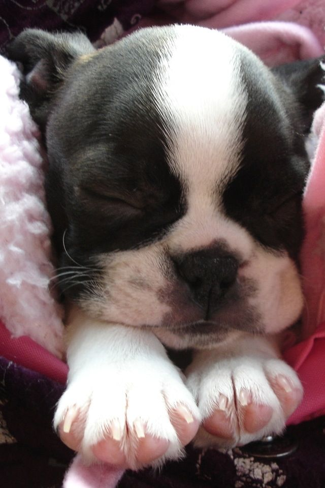 This is so sweet . This sweet soul dreaming sweet dreams of treats , good lovin , and playing !