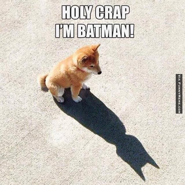 http://www.funnymeme.com/wp-content/uploads/2014/06/Animal-memes-holy-crap-im-batman-640x640.jpg - klik om te vergroten