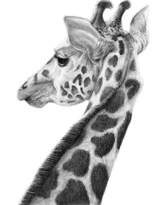 Giraffe Charcoal Drawing - Giraffe Art - Safari Animal - Nursery Decor - Black and White Giraffe - Wall Art - Wall Decor - GICLEE Art Print