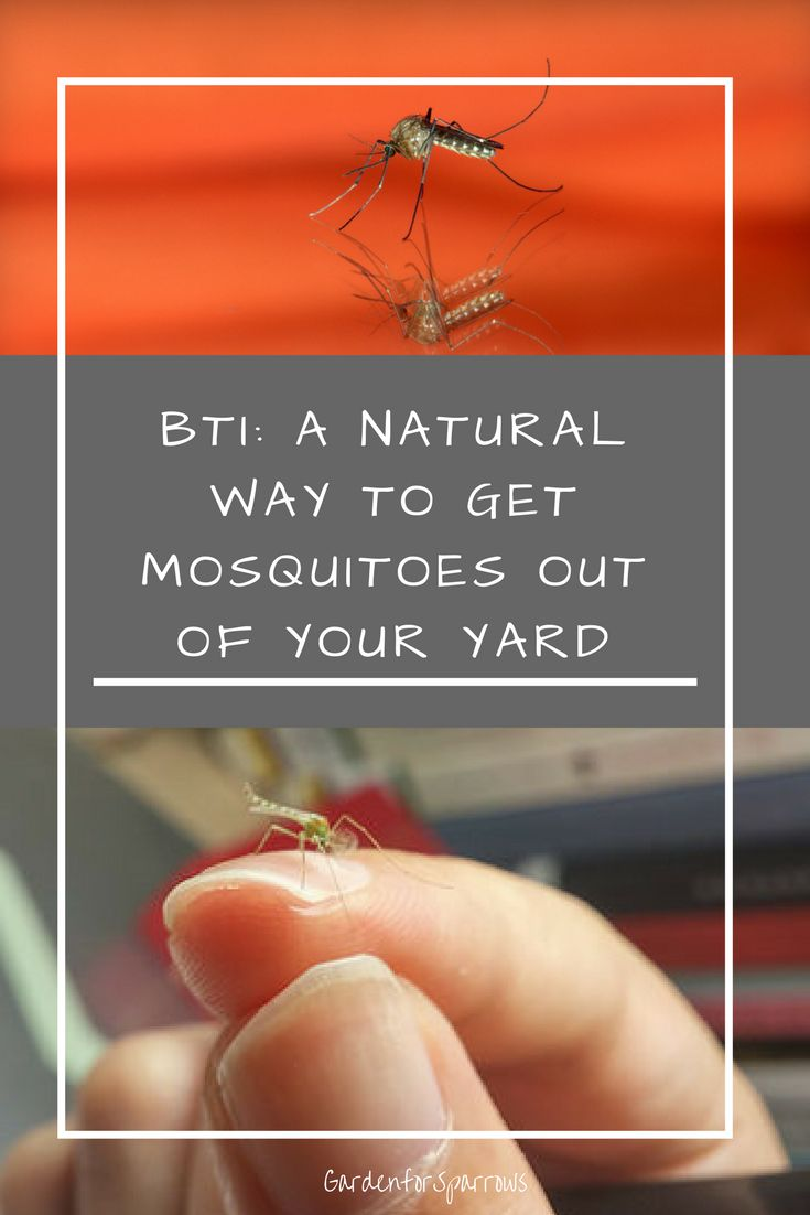 best 25 kill mosquitoes ideas on pinterest diy mosquito trap